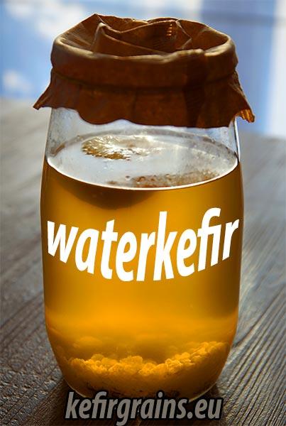 waterkefir